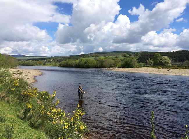 Come To Scotland For A Salmon Fishing Holiday